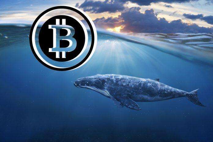 Биткоин-киты накапливают длинные позиции